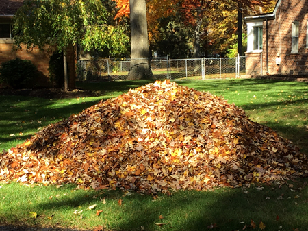 Giant pile of leaves