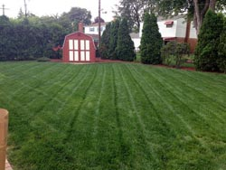 Landscaping Services - Lawn Cutting & Maintenance 1