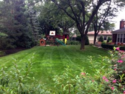 Landscaping Services - Lawn Cutting & Maintenance 2