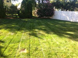 Landscaping Services - Lawn Cutting & Maintenance 3