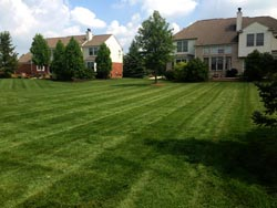 Landscaping Services - Lawn Cutting & Maintenance 4