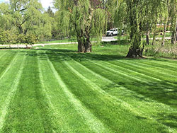 Nicely cut lawn 3